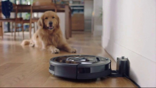 roomba y golden